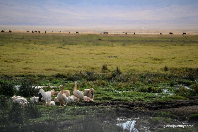 Ngorogoro Krater Tansania