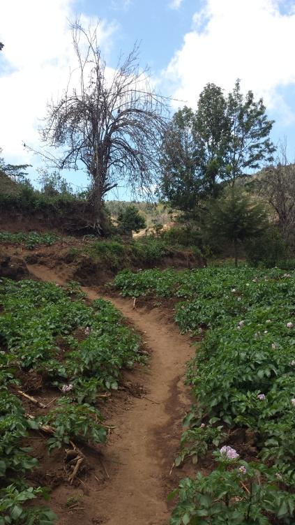 Wanderung Usambara Berge