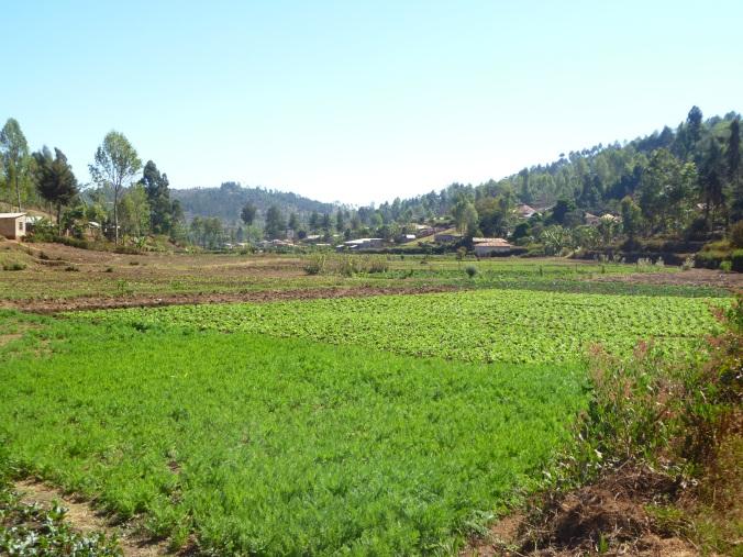 Tansania Usambara-Berge