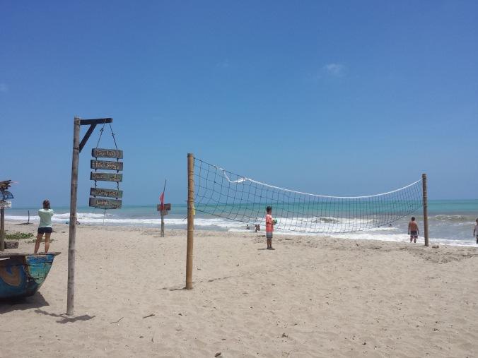strand-palomino